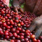 Импорт кофе - долгий путь из Италии в вашу чашку